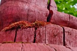 rotes Moos auf roter Holzskulptur. Kunst aus Kunst.